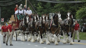 Clydesdales deliver check